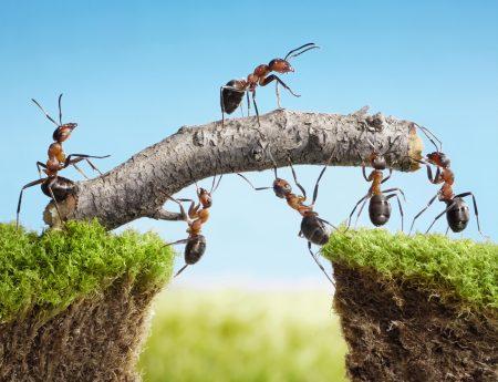 team freelancer of werknemer